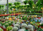 فروش ویژه ی گلهای آپارتمانی و کاکتوسهای بذری،کلکسیونی
